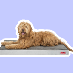 Orthopedic Beds For Large Dogs
