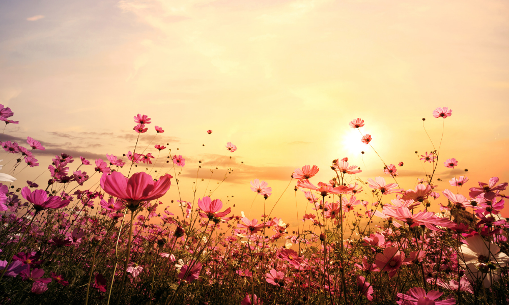 Best Flower Fields in the U.S. to Visit this Spring \u2013 Fupping
